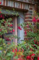 Charleston_fuchias_and_part_of_door.jpg